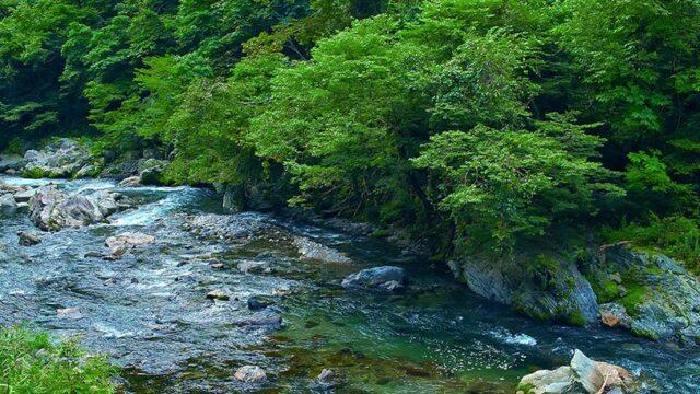 美しい渓流の様子